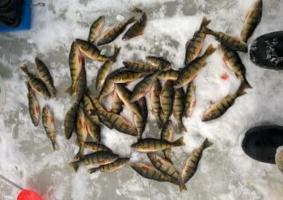 Caught fish on ice