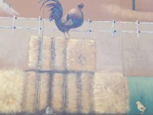 Chicken on hay bales