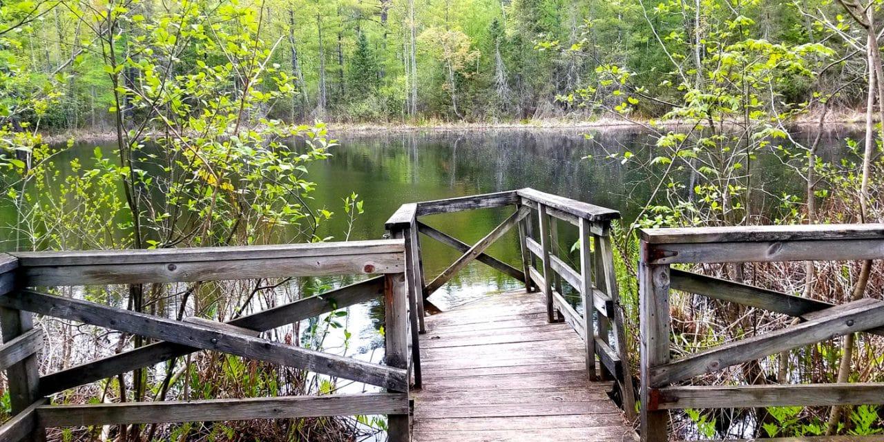 The Wetland Trail – A Unique Ecosystem