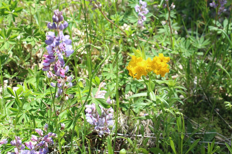 Flowers are Popping at Loda Lake Wildflower Sanctuary