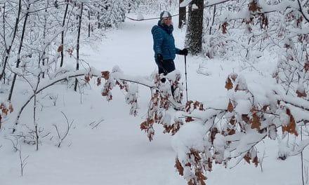 Traipsing Through the Winter Woods