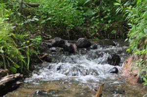 Water rushing downstream in river