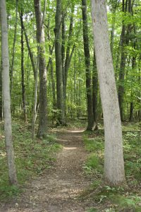 a2a Consumers Rustic trail path