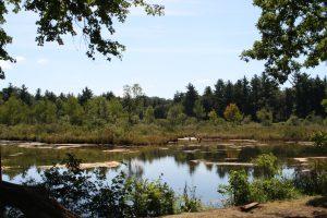 Coolbaum wetland vista