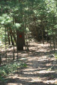 Coolbaum horse trail