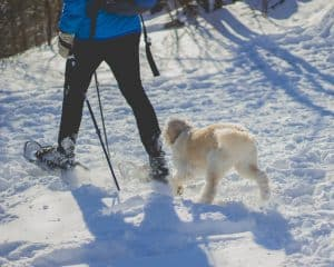 Dog following man in snowshoes