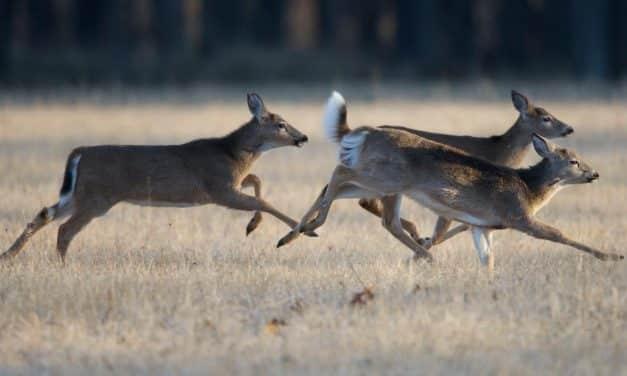 Rookie Deer Hunting in Newyago County