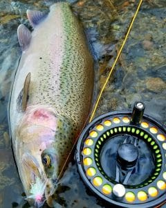 Salmon next to fishing reel