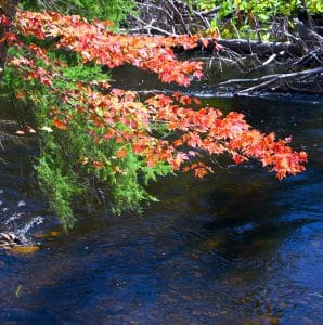 Fall branch over water