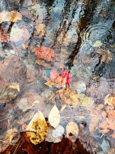 Fall leaves floating in river
