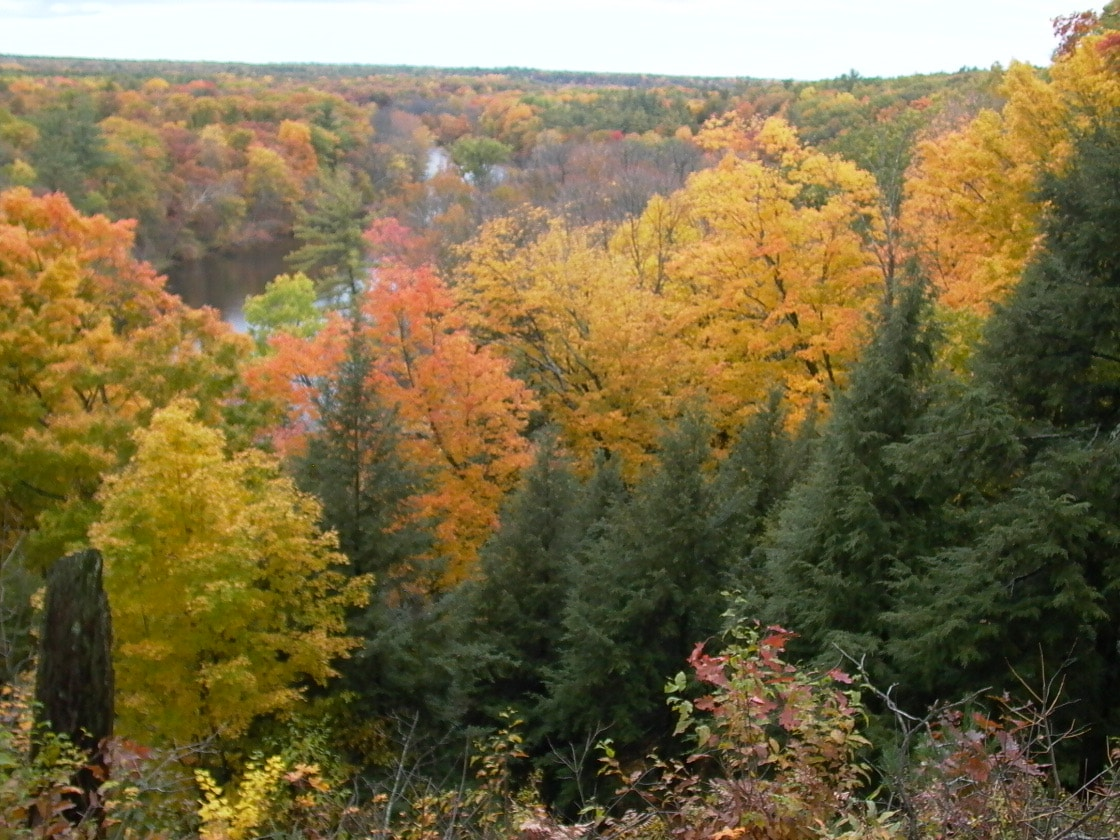 Fall trees over river