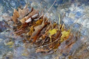 Stack of leaves in river stream