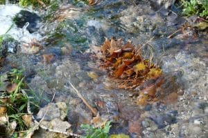 Fall leaves stacked in river