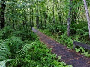 Boardwalk trail