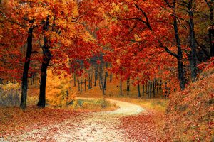 Pathway with fall color trees