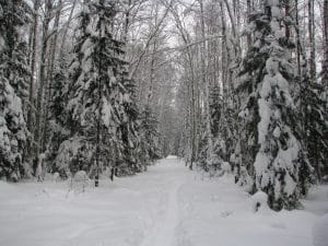 forest trail covered in snow