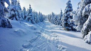 Winter cross country skiing trail