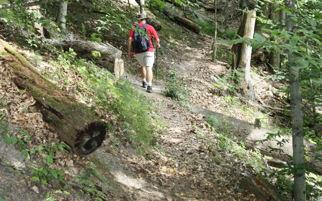 Exploring the Rustic Trail