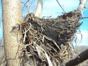 Close-Up of Bird's Nest