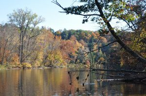 Fall trees on river bank