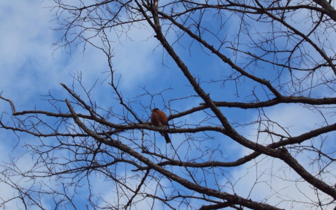 Birds of Newaygo County