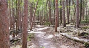 Branstrom Park Trail