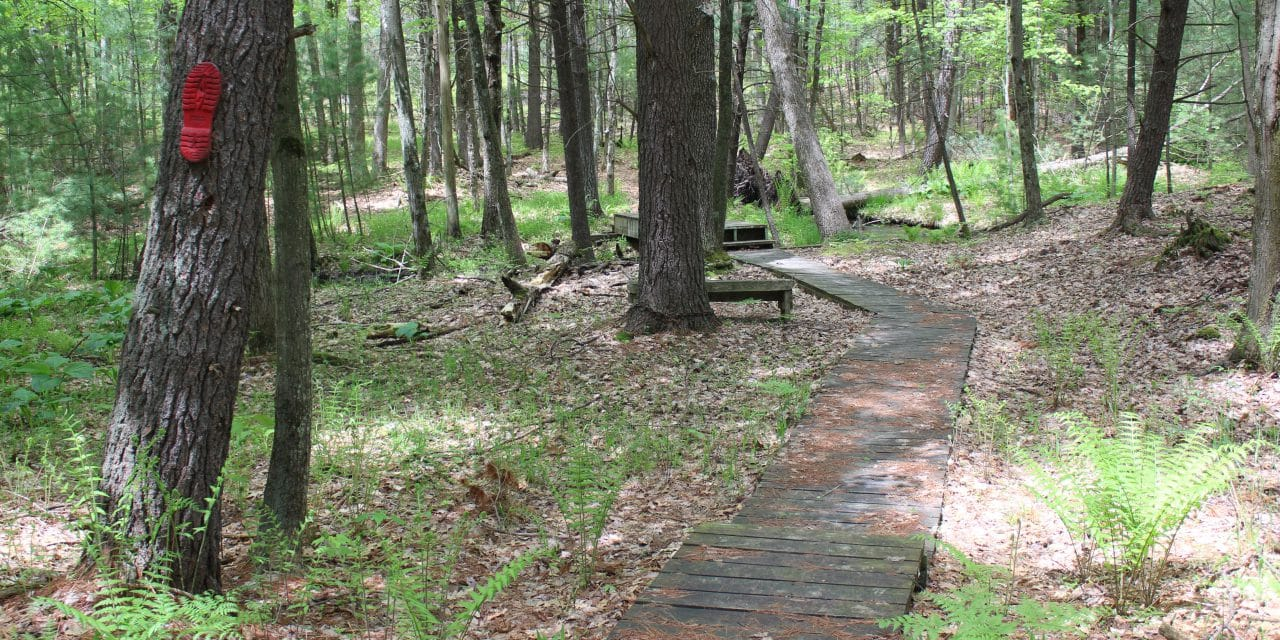 Coolbough Natural Area Offers Birds, Bugs and Boot Prints