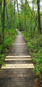 Wetland Trail boardwalk