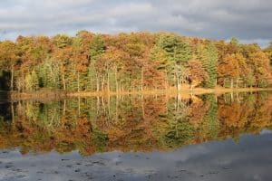 reflection of fall trees on water