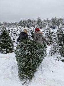 two people gathering a Christmas tree
