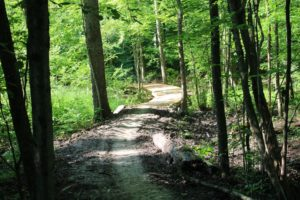Natural surface trail through wooded area